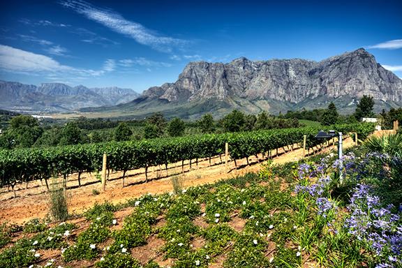 Weingutbesuch im Weinland bei Stellenbosch