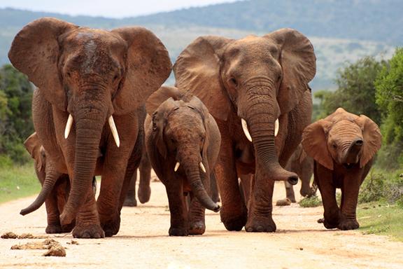Auf Pirschfahrt im Addo Elephant-Nationalpark