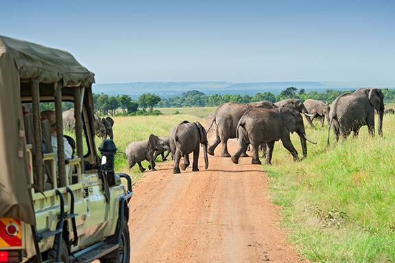 Safari im privaten Kariega-Reservat