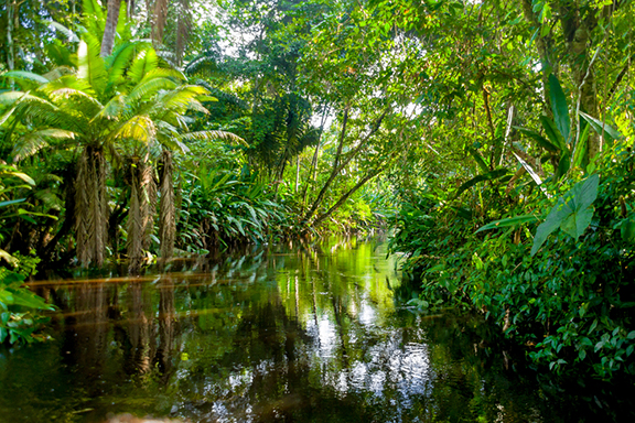 Das Amazonastiefland rund um Tena