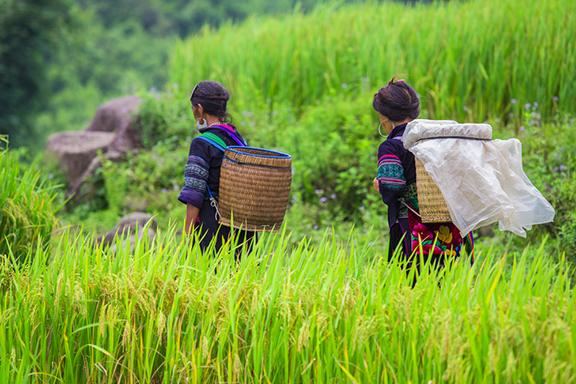 Trekking in den Reisfeldern rund um Sapa