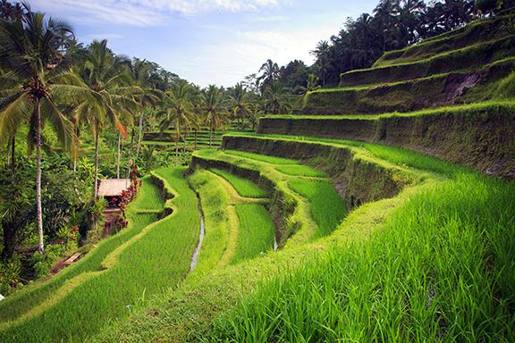 Bali: Entspannte Künstlerstadt Ubud