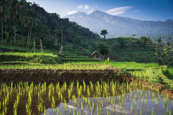 Lombok: Senggigi und Umgebung