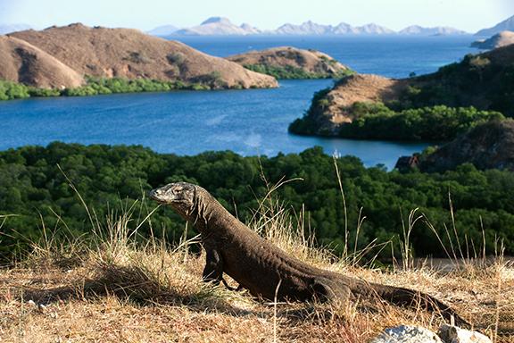Komodo-Nationalpark: Mit dem Boot zu den Urzeitechsen