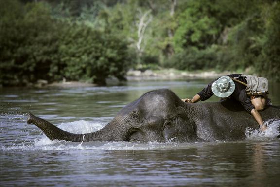Auf Tuchfühlung im Elefantencamp