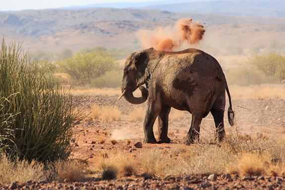 Uralte Felsenbilder und Wüstenelefanten im Damaraland