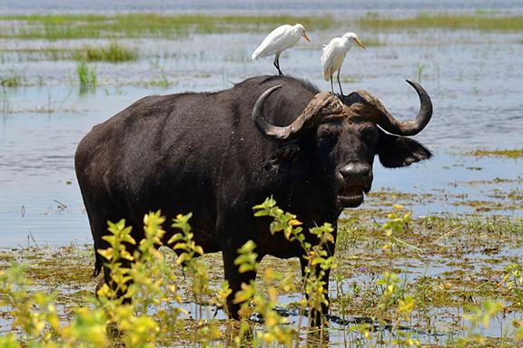 Auf Pirsch im Chobe-Nationalpark