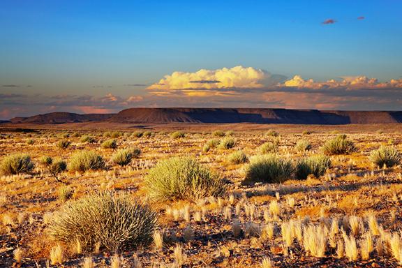 Magische Wüstenwelt in der Kalahari