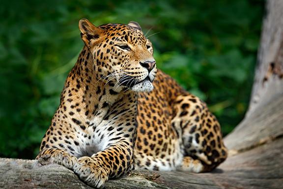 Auf Safari im Yala-Nationalpark