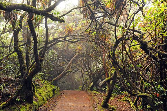 "Auf den Spuren des Quetzals im Nebelwald am ""Cerro de la Muerte"""