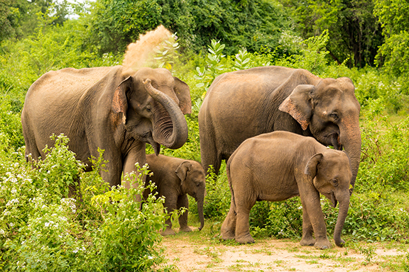 Udawalawe-Nationalpark mit Besuch des Elephant Transit Home