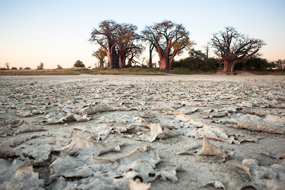 Die endlose Weite der Makgadikgadi Pans