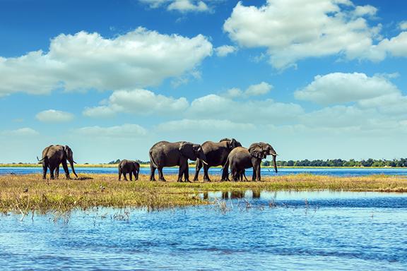 Okavango-Delta: Das Juwel der Kalahari