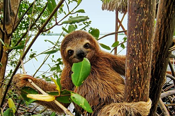 Unberührter Dschungel im Corcovado-Nationalpark