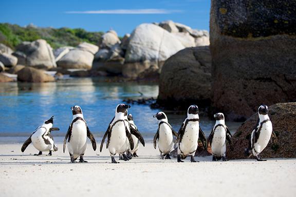 Kapstadt und die Kap-Halbinsel aktiv erkunden