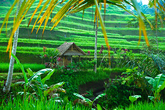 Bali – die Insel der Götter