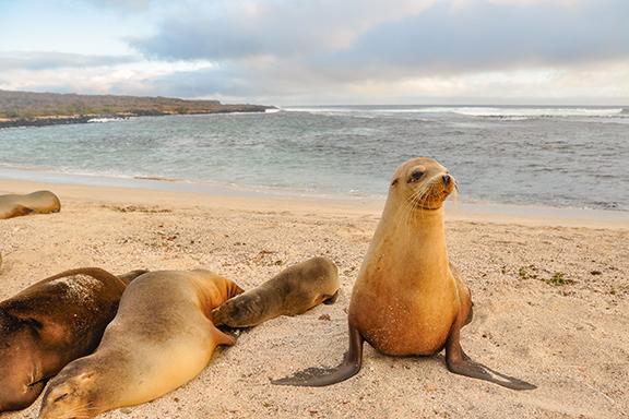 Von den kolumbianischen Anden bis Galápagos