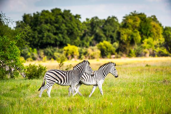 Safari pur im südlichen Afrika