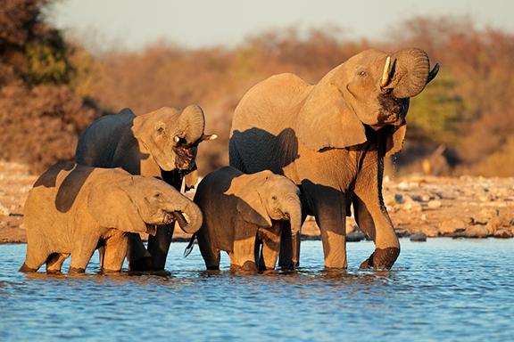 Von der Wüstenwelt der Namib bis zu den Victoriafällen