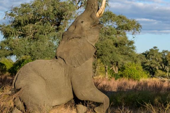 Simbabwe-Botswana-Namibia