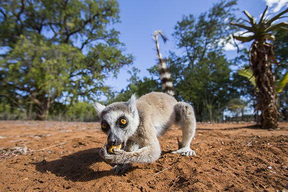 Madagaskar ComfortPlus