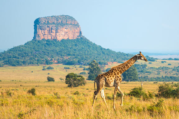 Südafrika mit Swasiland ComfortPlus