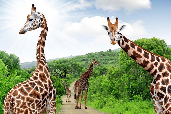Südafrika mit Verlängerung Krüger-Nationalpark und Blyde River Canyon