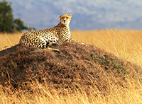 Südafrika mit Swasiland