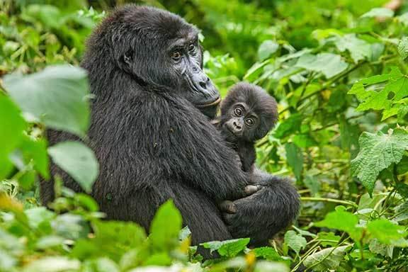 Uganda mit Vorprogramm Nordost-Uganda