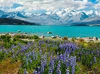Neuseeland-Vagabunt