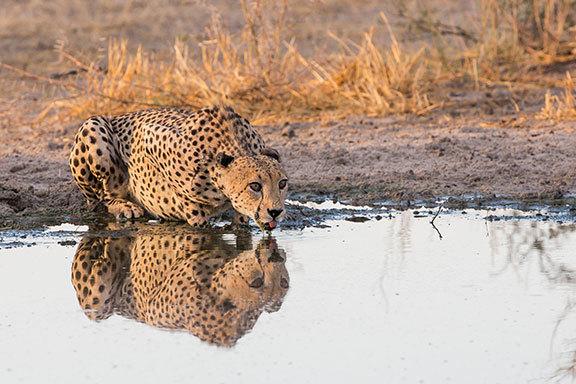 Namibia, Botswana, Simbabwe