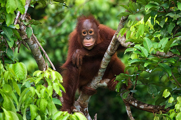 Malaysia: Borneo