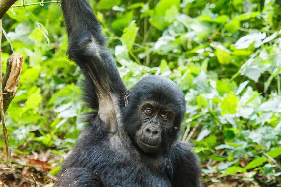 Ruanda und Uganda