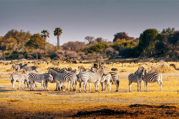 Namibia und Botswana mit Victoriafällen
