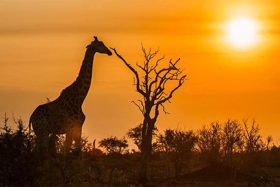 Südafrika, Botswana und Mosambik Comfort+