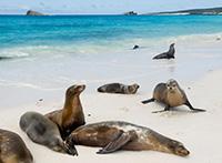 Ecuador mit Galápagos Inseln