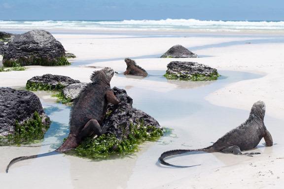 Peru und Ecuador mit Galápagos Inseln