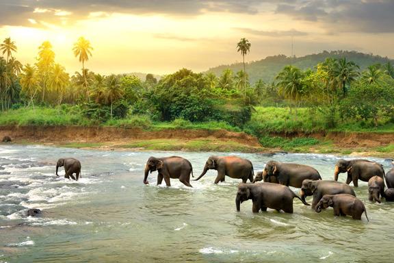 Sri Lanka - der Norden, Osten und Süden