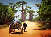 Madagaskar aktivPlus