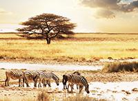 Namibia ComfortPlus