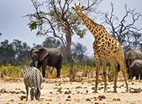 Botswana mit Victoriafällen und Sambesi Region (Caprivistreifen) ComfortPlus