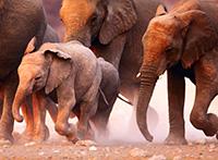 Simbabwe-Botswana-Namibia ComfortPlus