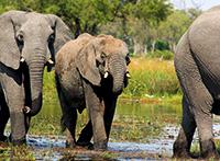 Botswana mit Victoriafällen und Sambesi Region (Caprivistreifen)