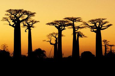 Länderabend Madagaskar - Artenvielfalt und Naturwunder