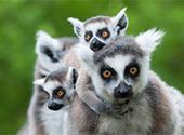 Madagaskar - Erbe des versunkenen Kontinents Lemuria?